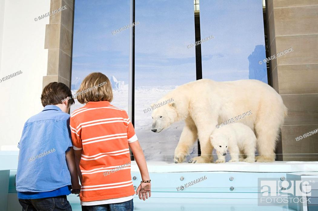 Stock Photo: Boys looking at polar bears in a museum.