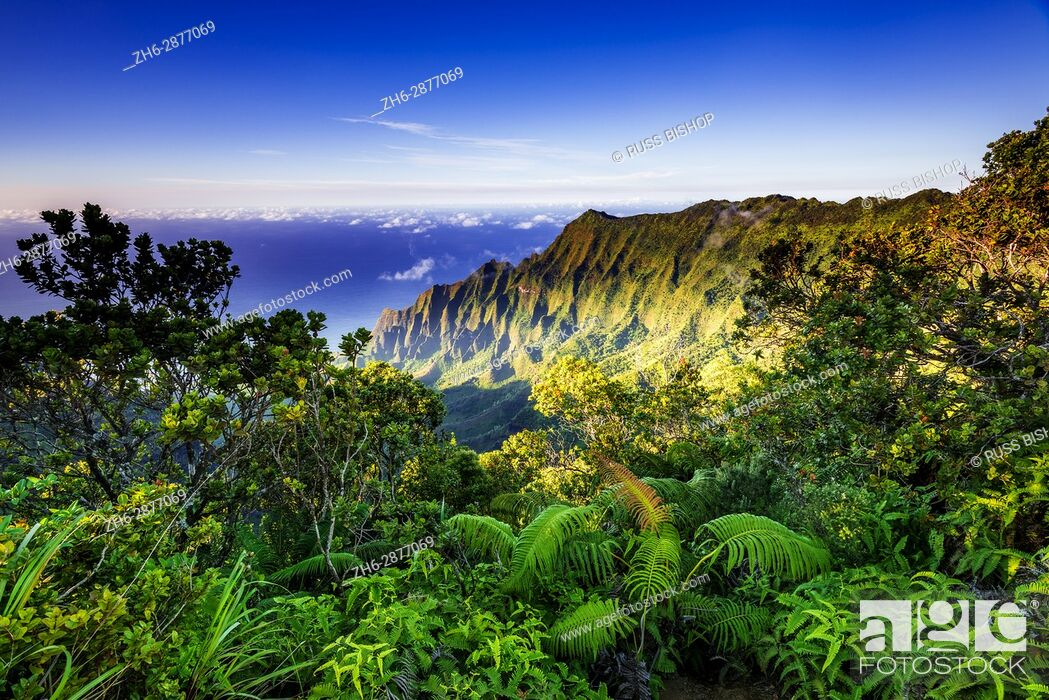Photo de stock: Kalalau Valley and the Na Pali Coast from the Pihea Trail, Kokee State Park, Kauai, Hawaii USA.