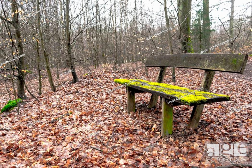 Stock Photo: Very old wooden bench covered in moss in the middle of a forest. Shot in autumn, the ground is covered in brown leafes with skinny trees in the back.