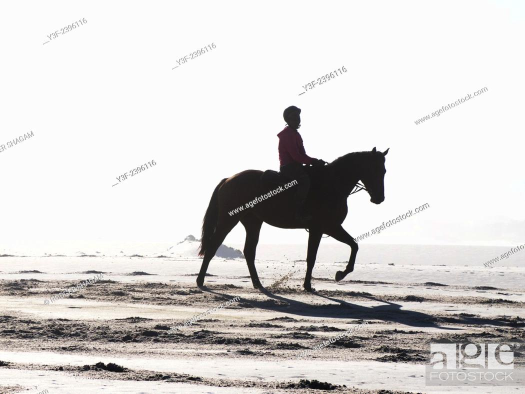 Stock Photo: Race horse being exercised on the beach as the sun rises. Noordhoek Beach, Cape Town, South Africa.