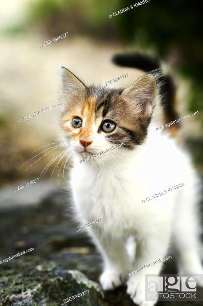 Stock Photo: Portrait of a calico kitten standing on a stone outdoors.