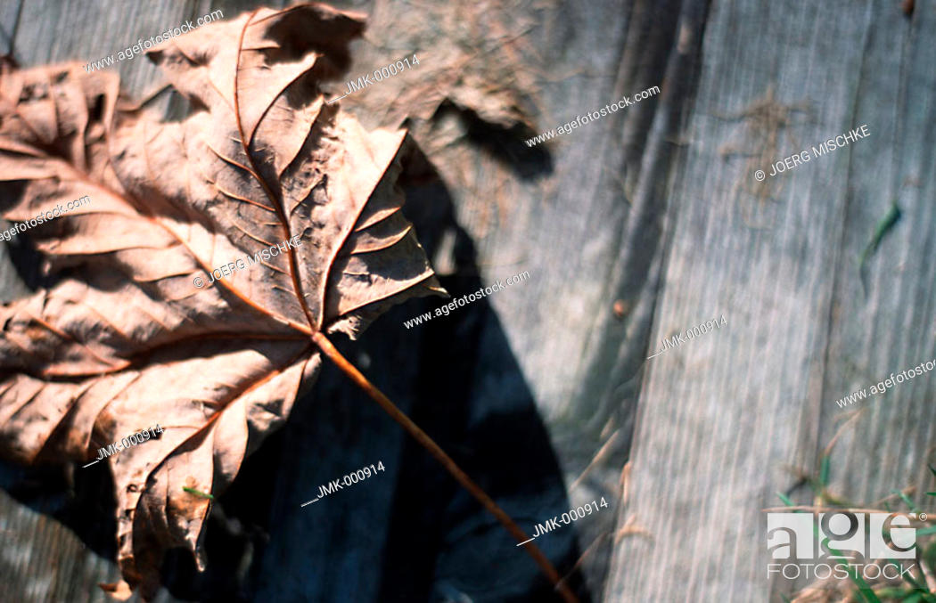 Stock Photo: Dried leave on wooden ground.