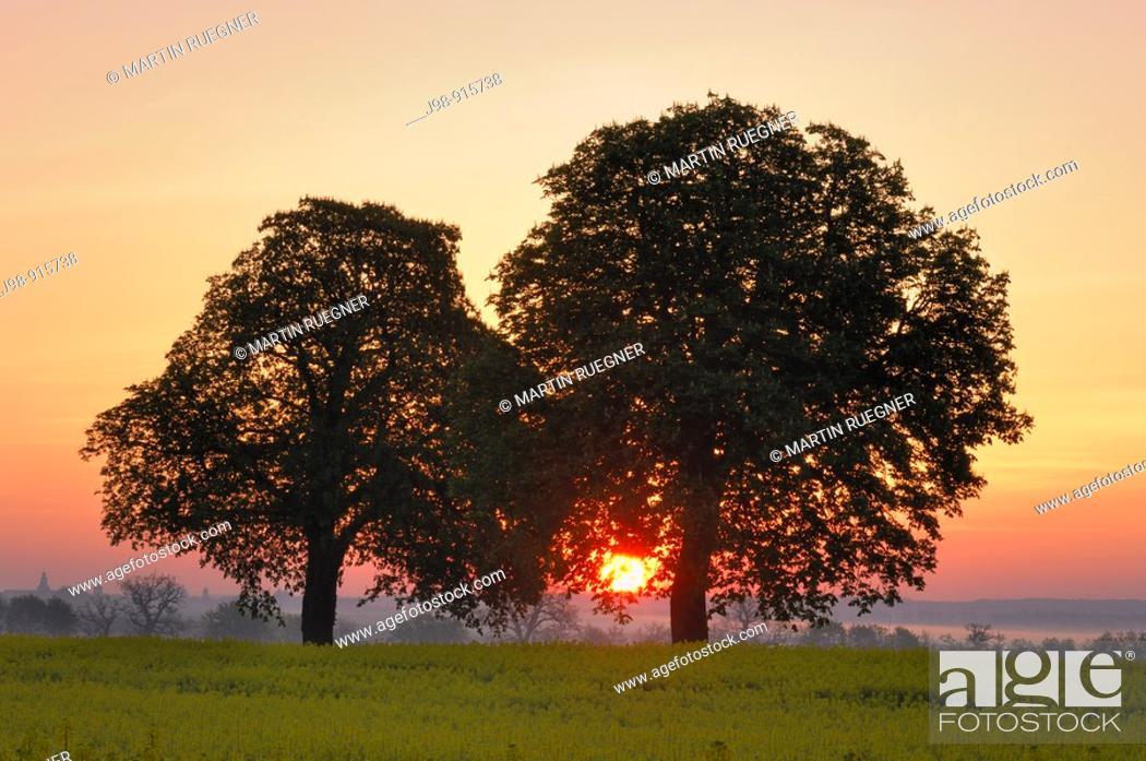 Stock Photo: Sunrise behind trees, Mecklenburg-Western Pomerania, Germany.