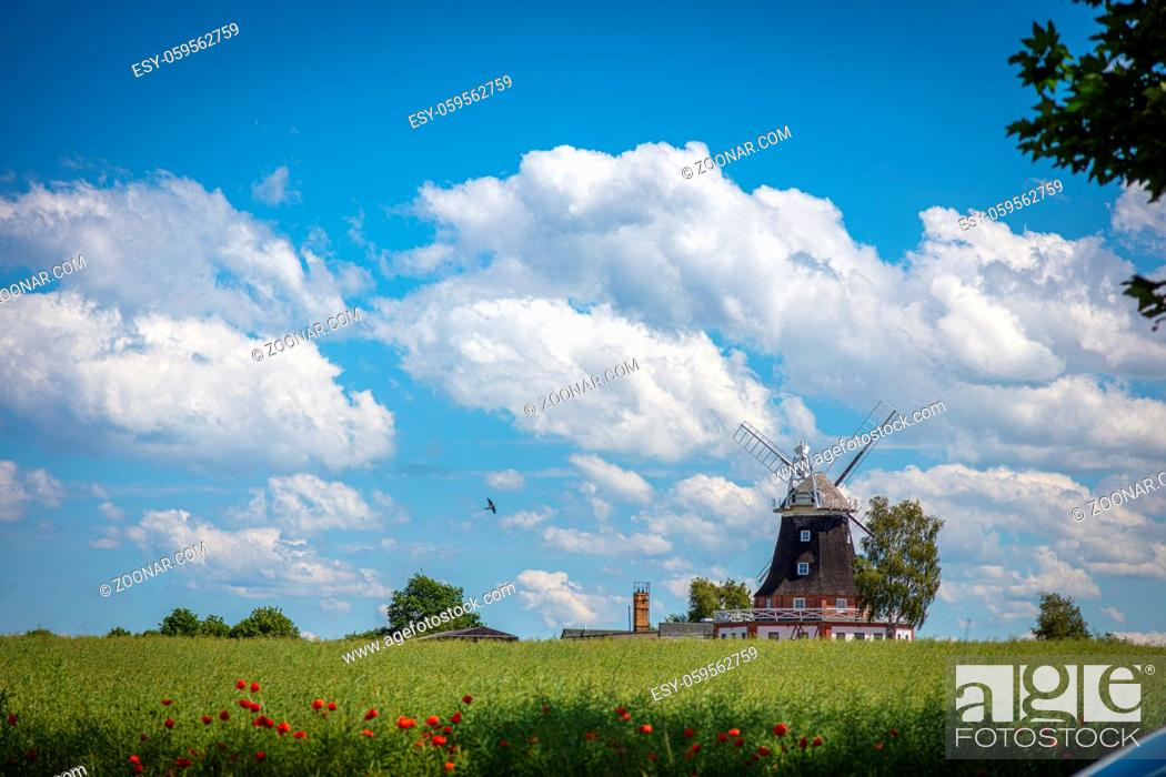 Photo de stock: an old windmill stands on a canola field in front of a blue sky with white clouds.