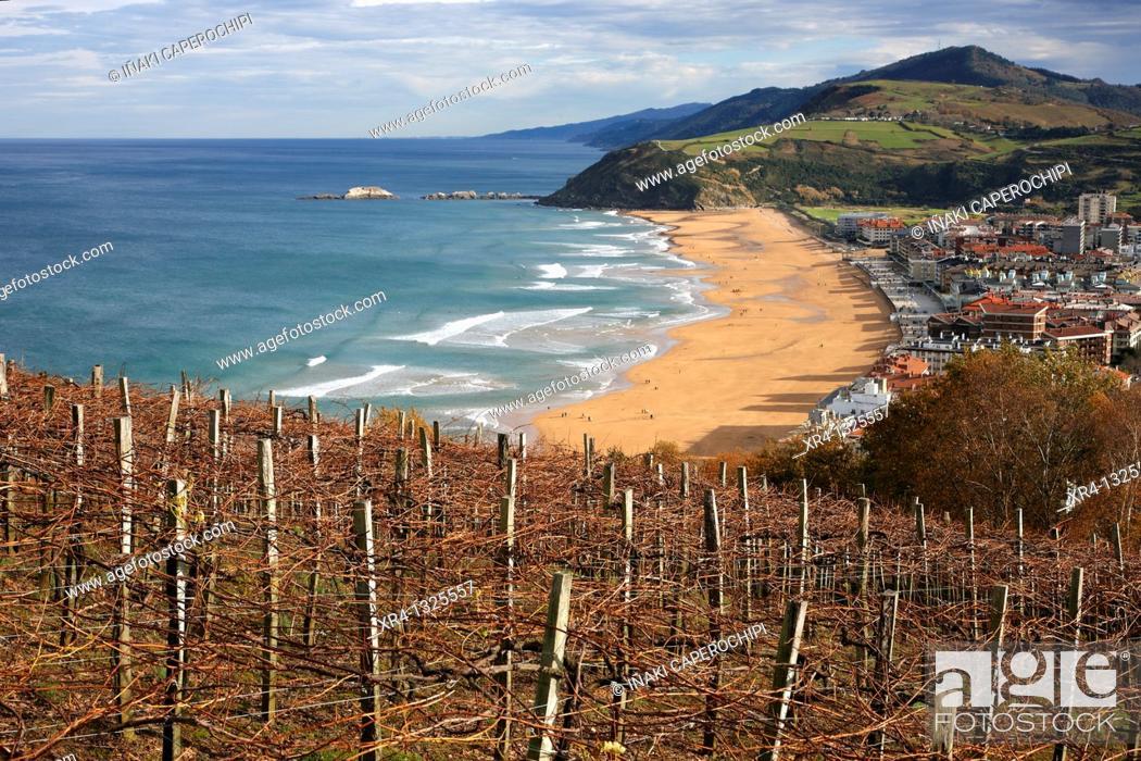 Stock Photo: Viñas de txakoli frente al mar, Zarauz Zarautz, Guipuzcoa Gipuzkoa Basque Country Euskadi, Spain España.
