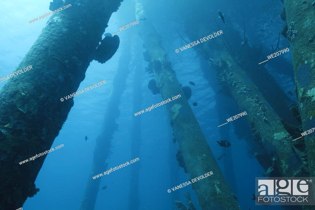 Stock Photo: Underwater fauna and flora in the Caribbean sea around Bonaire, Netherland Antilles. Divesite Salt Pier.