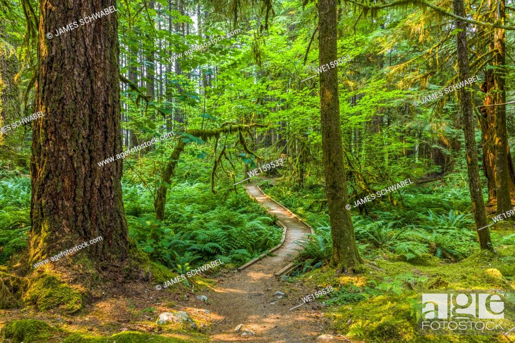 Stock Photo: Ancient Groves Nature Trail though old growth forest in the Sol Duc section of Olympic National Park in Washington, United States.