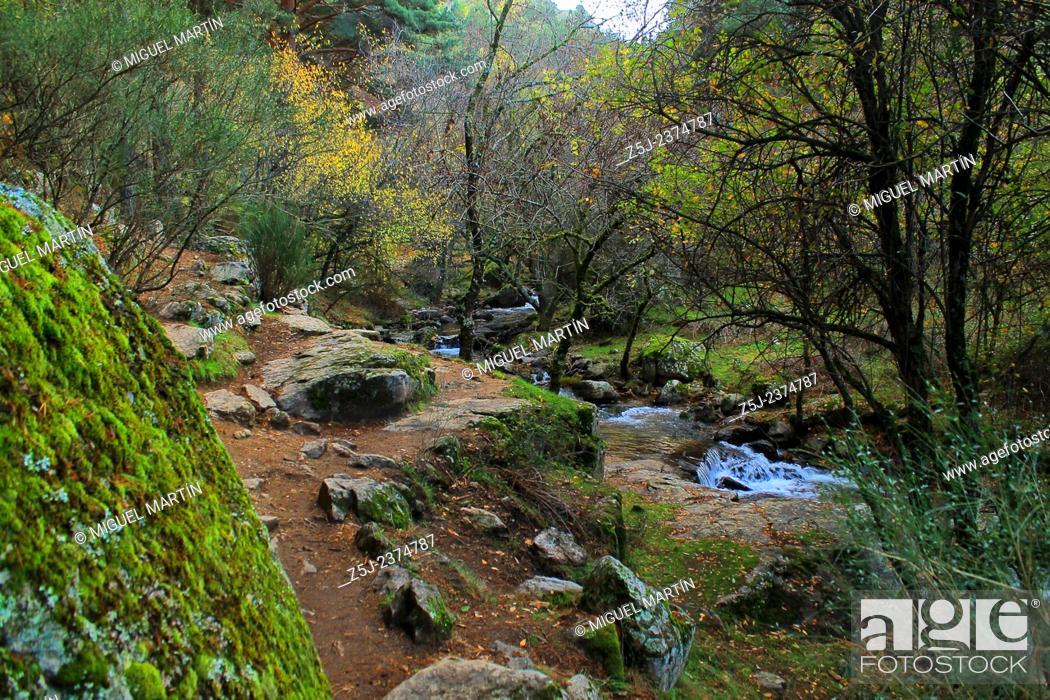 Stock Photo: A twisty path leads between oaks and pine trees from El Paular to the El Purgatorio waterfalls, alongside the Aguilón river near Rascafría (Madrid autonomous.