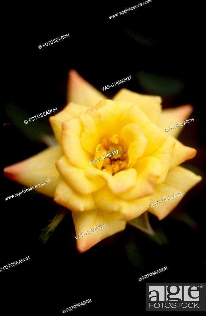 Stock Photo: yellow flowers, nature, flowers, flower, scene, wildflower, landscape.