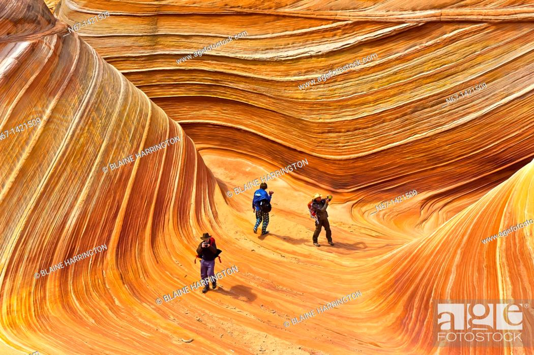 Stock Photo: Hikers exploring 'The Wave', a 190 million year old Jurassic-age Navajo sandstone rock formation, Coyote Buttes, Paria Canyon-Vermillion Cliffs Wilderness Area.