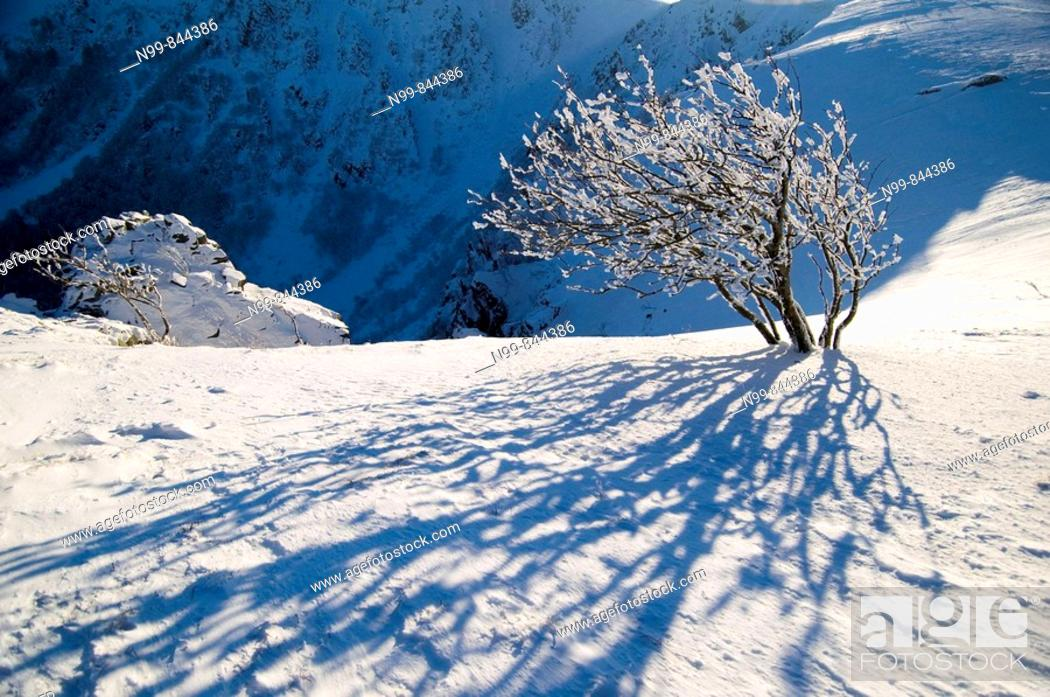 Stock Photo: Hohneck, steep cliff of Col du Falimont, snow and hoar-frost in winter, Vosges, lower mountain ranges, Alsace, France.