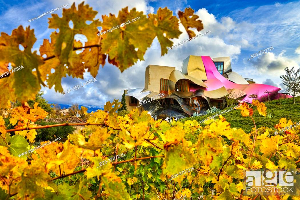 Photo de stock: Vineyards in autumn, The City of Wine, Marques de Riscal winery, building by Frank O. Gehry, Elciego, Alava, Rioja Alavesa, Basque Country, Spain, Europe.