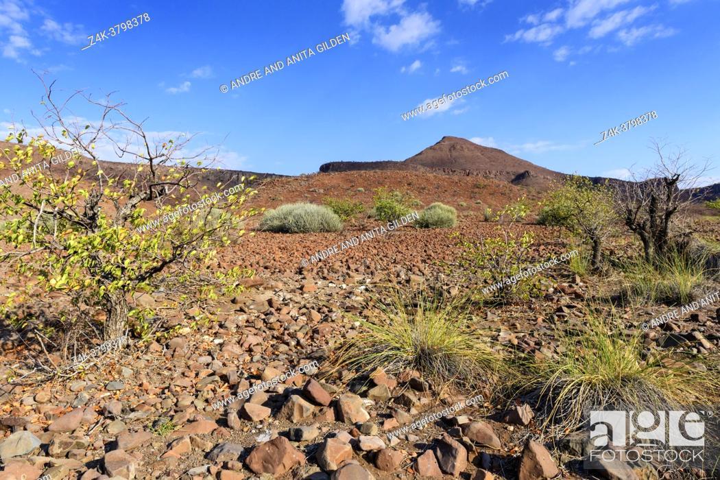 Imagen: Desert landscape with red (thora) rock and vegetation, Damaraland, Namibia.