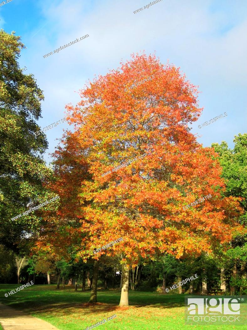 Imagen: Tree in autumn colours in Brittany, France.