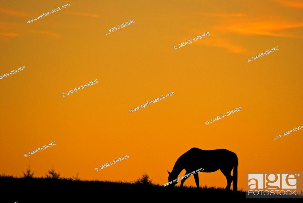 Stock Photo: A horse grazes in a field at sunrise.