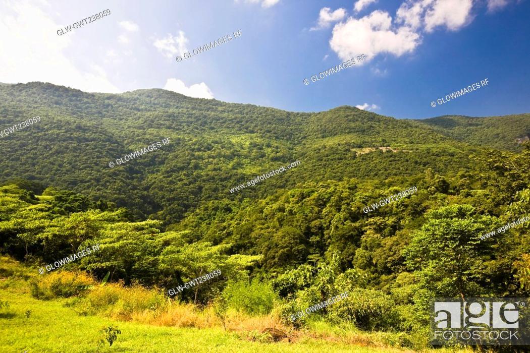 Stock Photo: Trees in a forest, Tamasopo, San luis Potosi, Mexico.