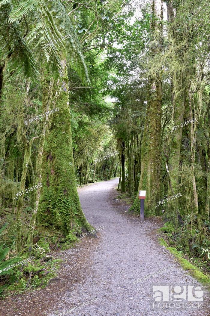 Stock Photo: The rainforest at Lake Matheson. New Zealand.