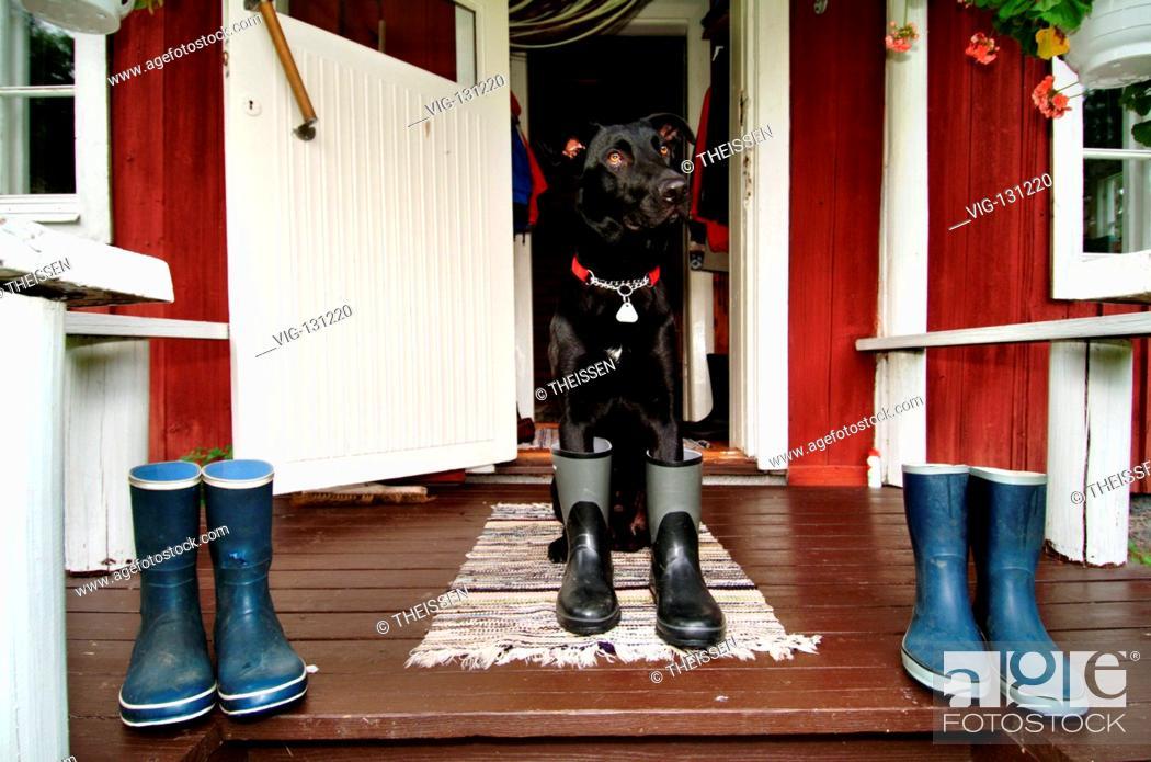 Imagen: Hund in Gummistiefeln auf der Veranda einer roten Holzh³tte, PR / dog in rubber boots on a veranda of a red wooden cottage, PR. - Finland, 01/01/2005.