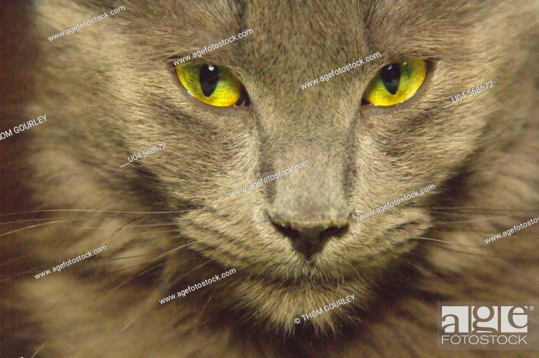 Stock Photo: Domestic cat.