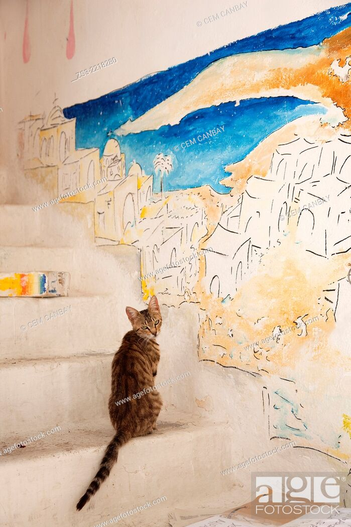 Stock Photo: Cat in front of a painted wall at the town center Chora, Ios, Cyclades Islands, Greek Islands, Greece, Europe.