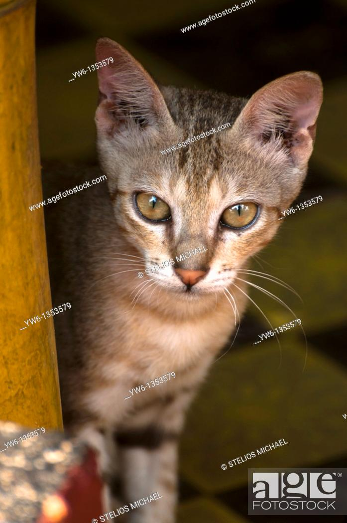 Stock Photo: Young cat peeping from a beach hut patio in Kerala, India.