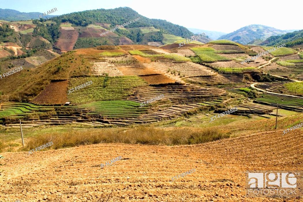 Stock Photo: China, Yunnan, between Menghai and Lancang, tea plantation.