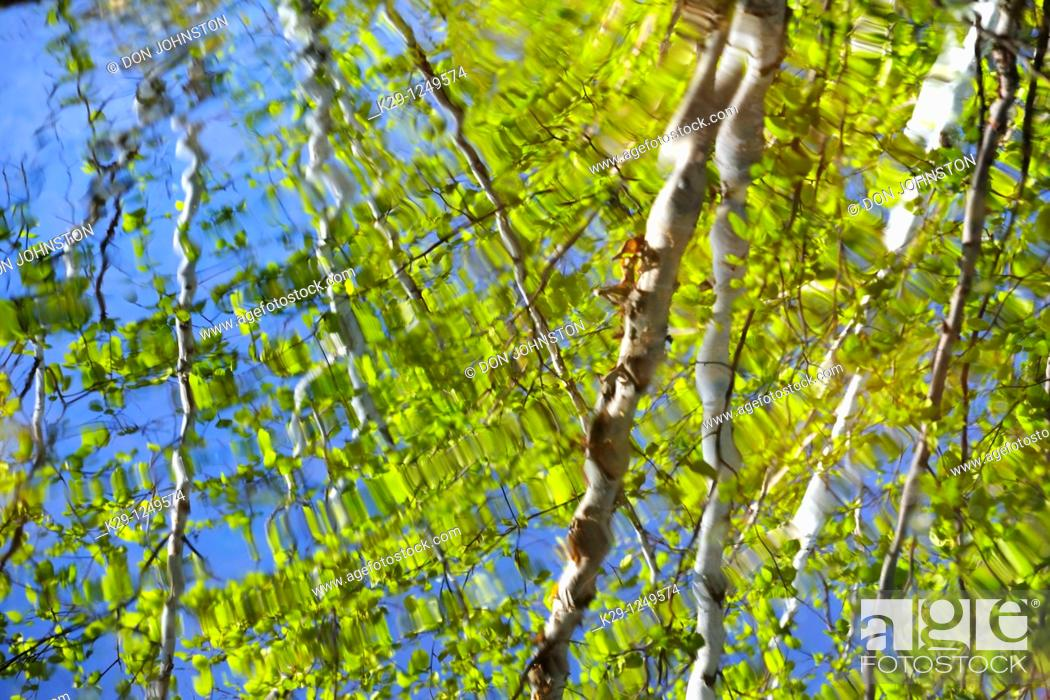 Stock Photo Birch Tree Reflections In A Pool Below Waterfall