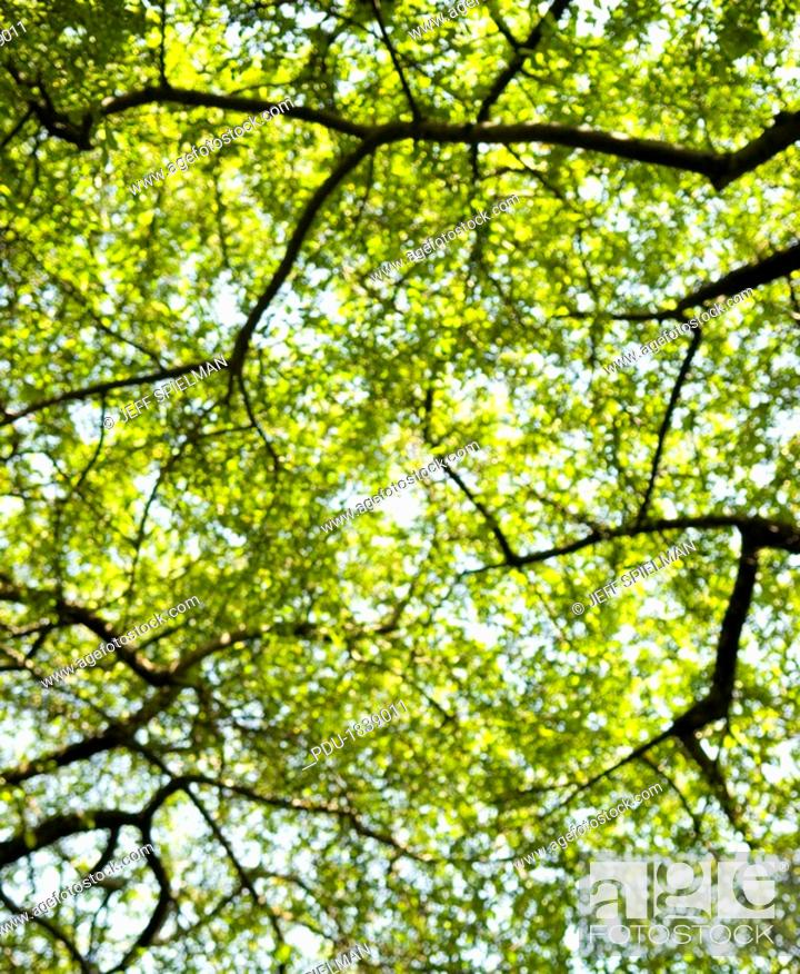 Stock Photo: Upward View of Trees in Central Park - Soft Focus.