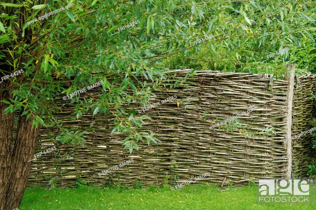 Stock Photo: Willow fence.