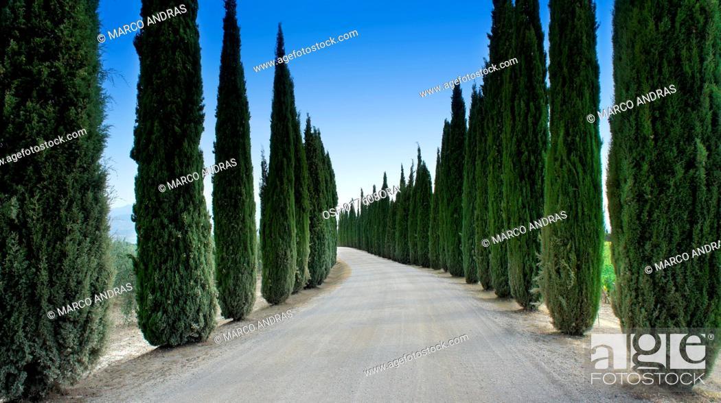 Stock Photo: Italy, Tuscany. Montalcino.