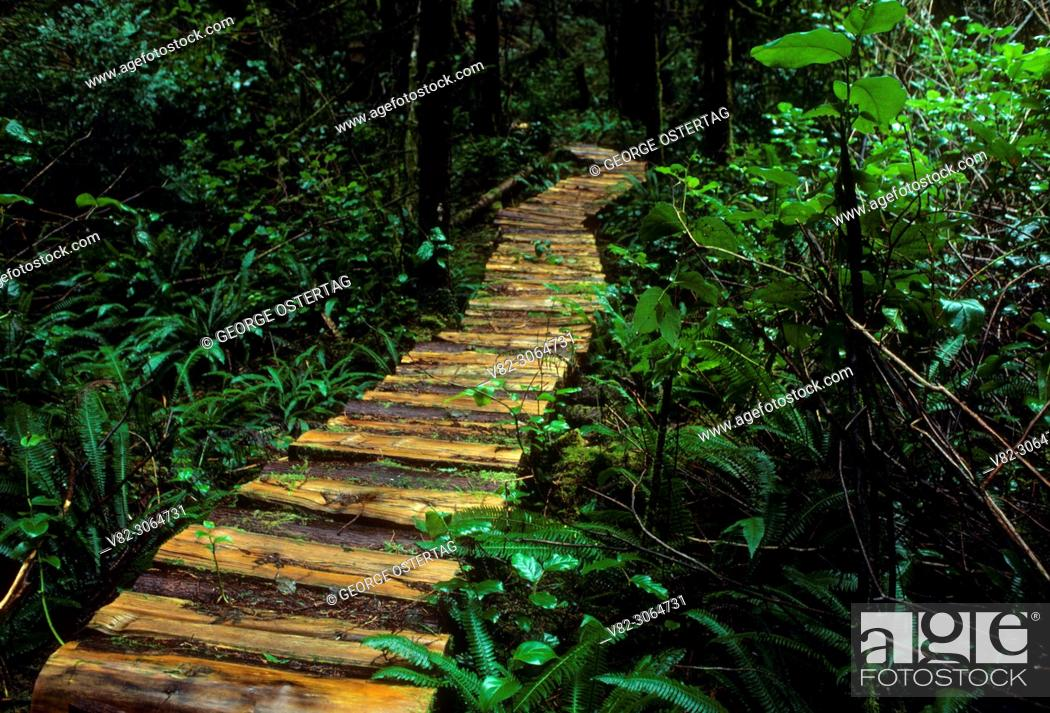 Stock Photo: Boardwalk on Siltcoos Lake Trail, Oregon Dunes National Recreation Area, Oregon.