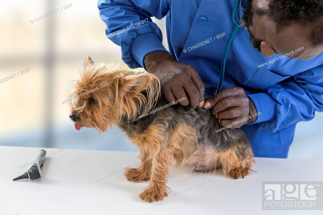 Stock Photo: Vet's appointment.