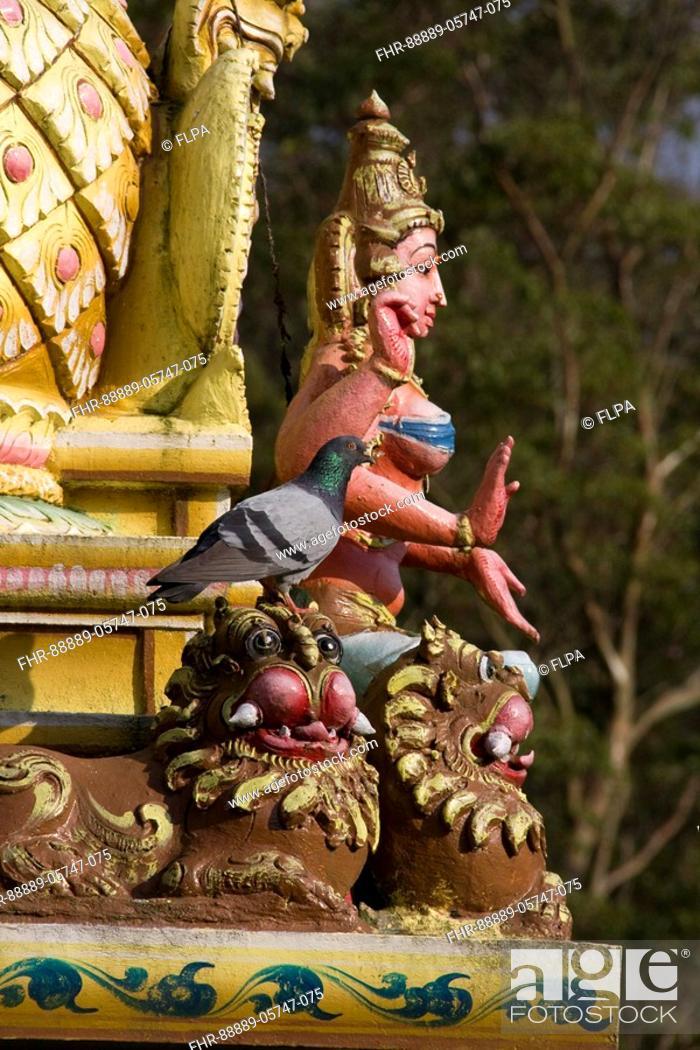 Rock Pigeon On Mythological Figure At The Seetha Amma Temple