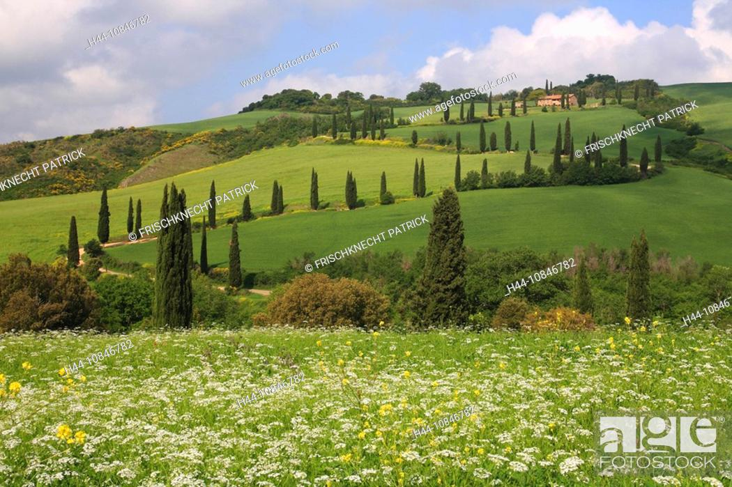 Stock Photo: Italy, Europe, Tuscany, Toscana, hills, hill, scenery, landscape, nature, landscape, cypresses, cypress trees, avenue,.