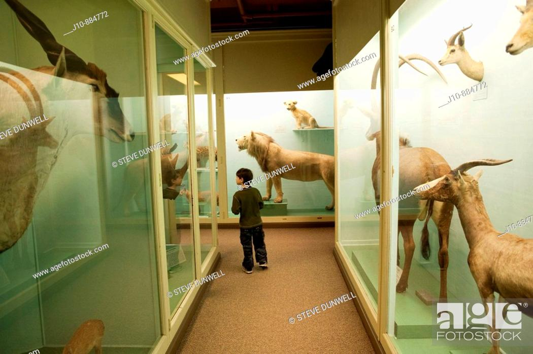 Stock Photo: Mammals, Museum of Natural History, Harvard University, Cambridge, Massachusetts, USA.