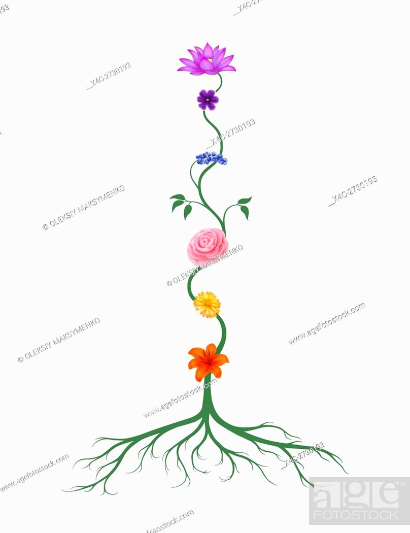 Chakra Symbols Represented As Associated With Chakras Flowers And