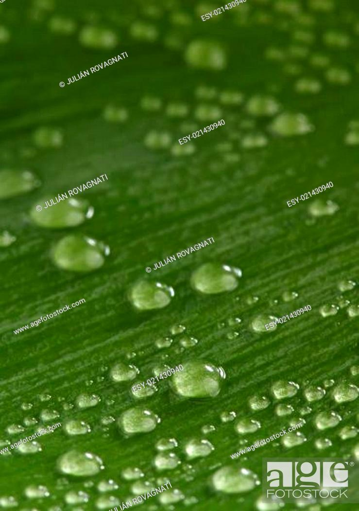 Stock Photo: Green leaf with drops of water.