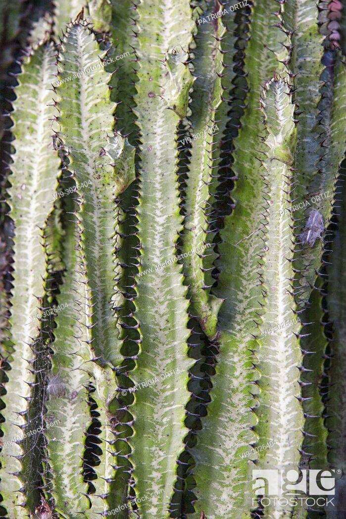Stock Photo: Long Cactus.