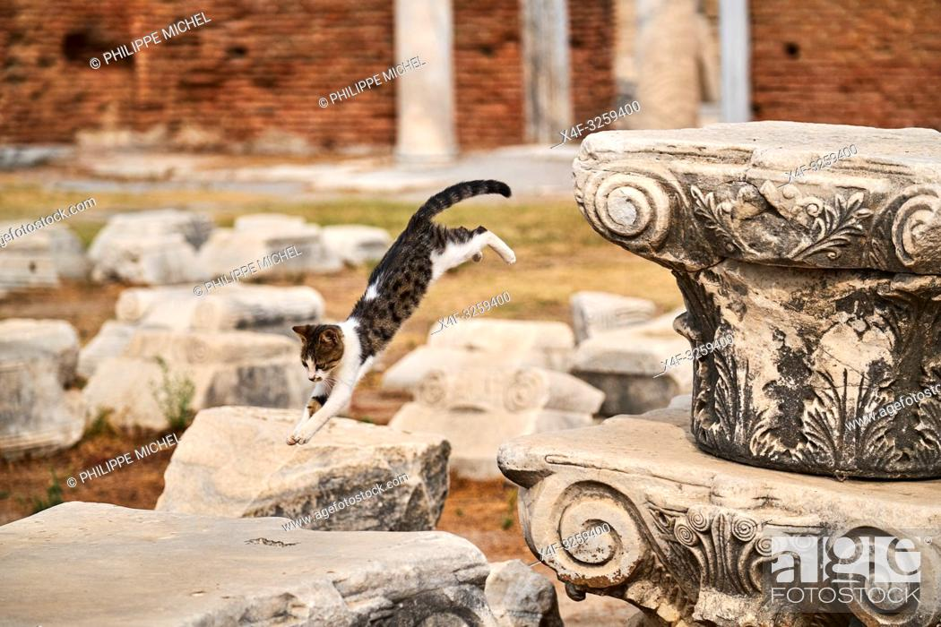 Stock Photo: Turkey, Izmir province, Selcuk city, archaeological site of Ephesus, many cats leave on the site.