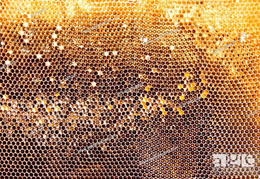 Stock Photo: Honeycomb mesh.