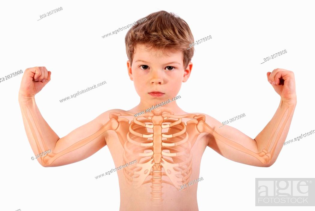 Thorax Drawing 6 Year Old Boy Bones Of The Thorax And The Arms