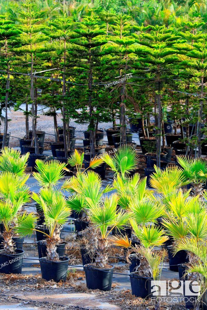 Stock Photo: Spain, canary islands, Gomera, plants.