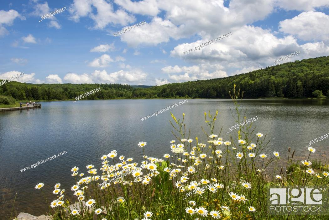 Imagen: Wild daisies stand in the foreground and puffy white clouds fill a blue sky above Spruce Knob Lake in West Virginia.
