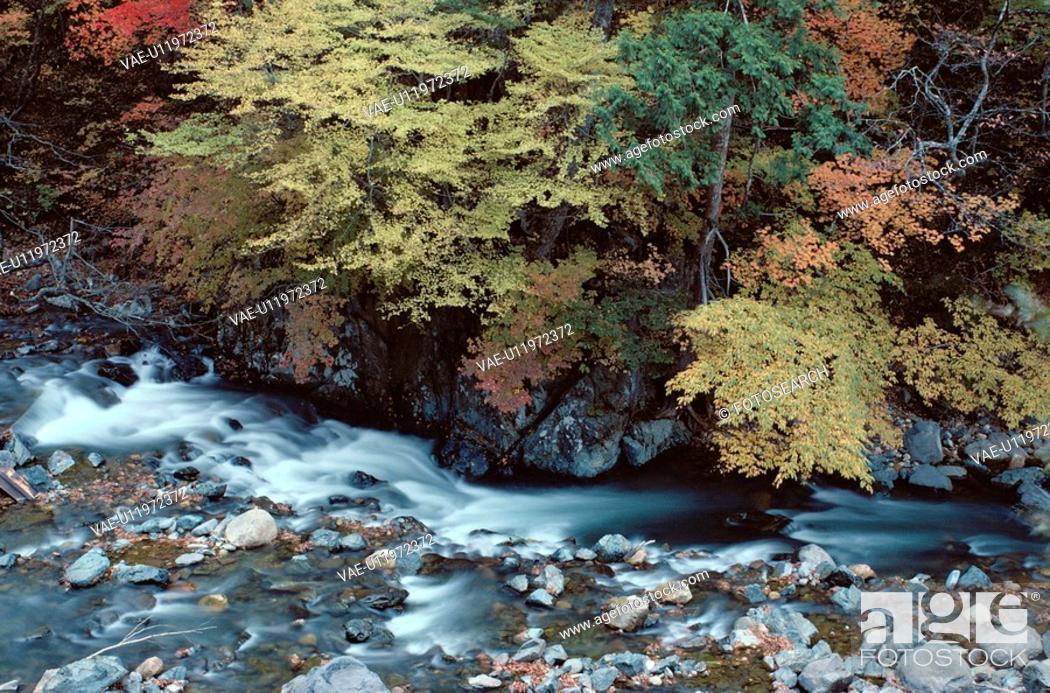 Stock Photo: Stream Near Trees.