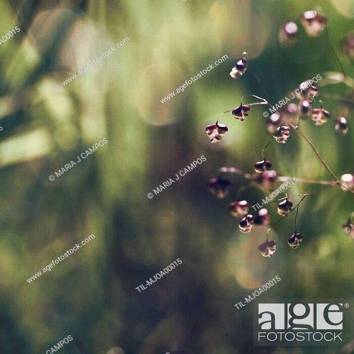 Stock Photo: Macro photo of little purple and white flowers with blurred background and bokeh in green and rose tones.