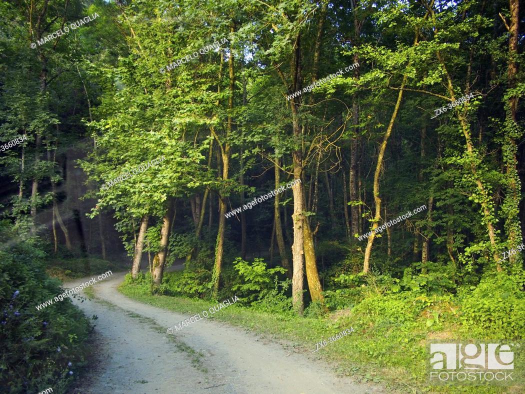 Imagen: Riverside forest at La Llavina site, Montseny village countryside. Summer time at Montseny Natural Park. Barcelona province, Catalonia, Spain.