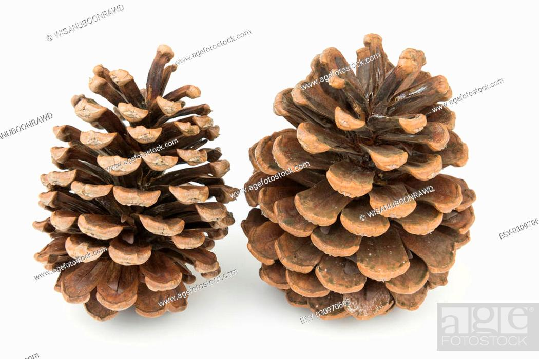 Stock Photo: Two dried pine cones on isolated white background.