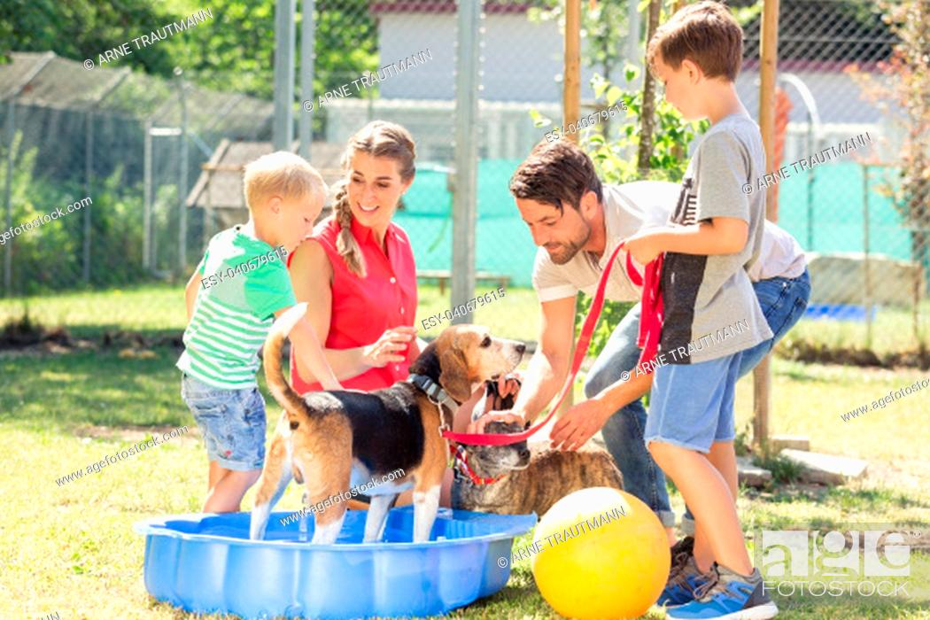 Photo de stock: Family playing with dog from animal shelter in pool with water.