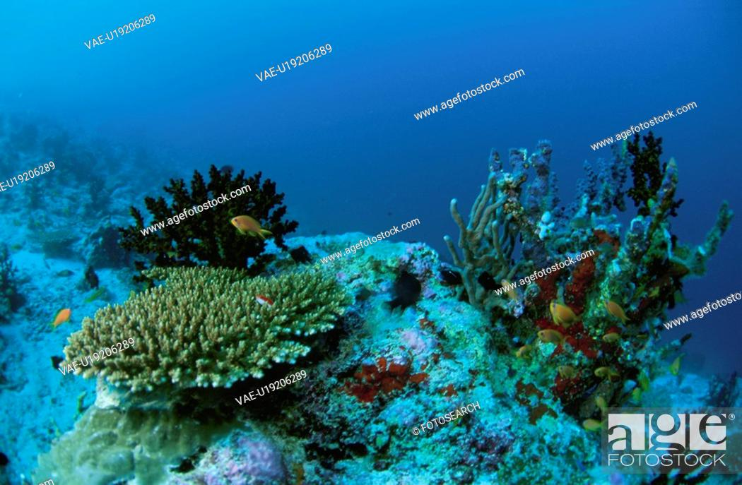 Stock Photo: Fish And Coral.