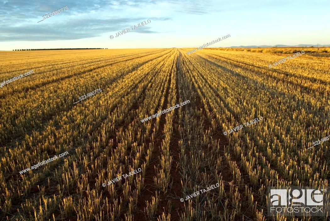 Stock Photo: Stover, Toledo province, Castilla-La Mancha, Spain.
